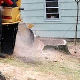Tree Stump Grinding, Ocala FL